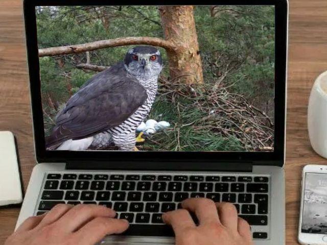 Vogeltjes kijken via webcams